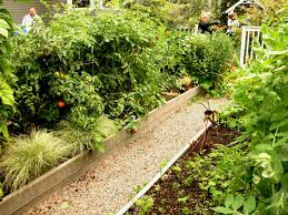 charming small backyard vegetable garden ideas in wooden containers mixed with simple tiny stones footpath outdoor