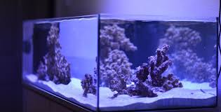 the best led lights for growing c in the marine aquarium
