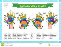 Hand Reflexology Chart Left Hand Hand Reflexology Chart Stock Illustration Illustration Of