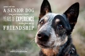 Quotes About Dogs And Friendship New Somecallmeaseniordogthatjustmeansihaveyearsofexperience