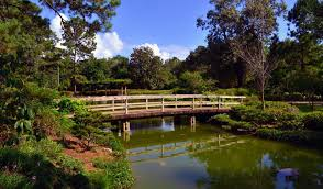 japanese garden in hermann park photo justin ins