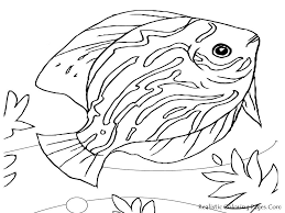 Realistic Sea Life Coloring Pages Printable Coloring Page For Kids