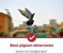 top 5 best pigeon deters 2021