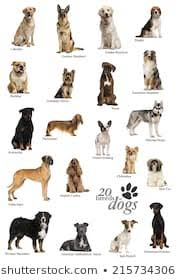 Dog Breed Chart Dogs Breed Stock Photos Images Photography Shutterstock