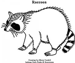 Small Picture Get This Printable Raccoon Coloring Pages 01827