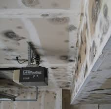 mold in the garage health