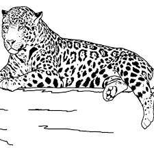 Realistic Animal Coloring Pages - chuckbutt.com