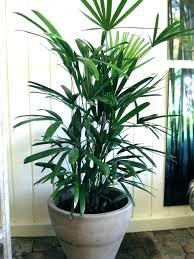 big indoor plants large plant pots office pot cute interior bunnings picture of best large indoor plants
