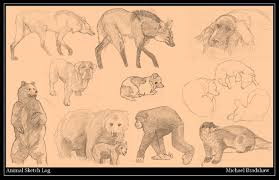 Artstation Animal Sketch Log Michael Bradshaw