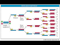 Pcr Polymerase Chain Reaction In Detail Youtube