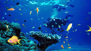 Image result for ambergris caye scuba diving