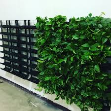 Vertical Living Wall - VerTexx Installation Guide