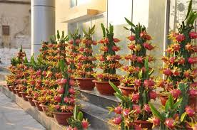 18 Types Of Dragon Fruit Cuttings  YouTubeHow To Take Care Of Dragon Fruit Tree