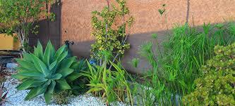 create a stunning low maintenance garden