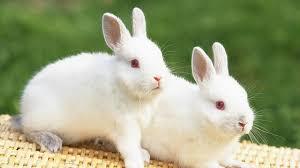 rabbit wallpapers