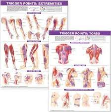 Trigger Point Chart Set Torso Extremities Paper