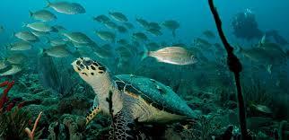 picture of giant turtle on scuba dive lesson at tropic scuba