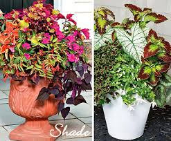 Small Picture Potted Plants for Shade flowers Pinterest Plants Gardens