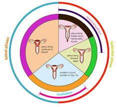 Period Chart To Avoid Pregnancy Ovulation And Safe Period What Is The Safe Period To Have