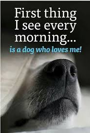 Dog Quotes Love Best Dog Love Quotes Awesome 48 Dog Quotes For People Who Love Dogs