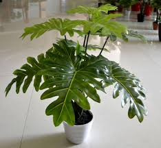 Artificial Decorative Indoor Trees
