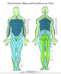 Dermatomal Pattern New Cervical Lumbar Dermatomes Map Of Upper Lower Body Leg Limbs Head