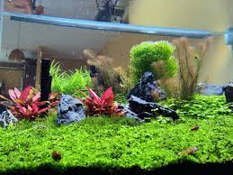 full image for diy planted tank led lighting low tech planted tank led lighting planted aquarium