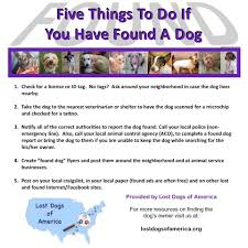 If You Find A Dog Lost Dogs Of California