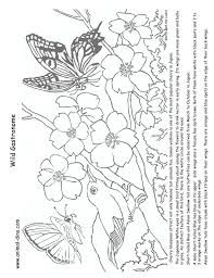Small Picture Animal Coloring Page Cherry Blossom Print Size Jack the