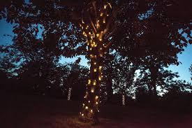 Fairy Light Tree wrapping - Kenton Hall Estate - Suffolk