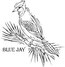 Small Picture Bird coloring pages Colorful blue jay coloring page Bird