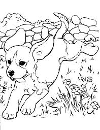 realistic puppy coloring pages. Fine Realistic Puppy Coloring Pages For Free Realistic Dog Dogs  Printable Biscuit The   For Realistic Puppy Coloring Pages A