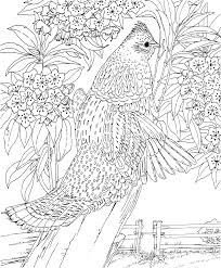 Hard Coloring Pages Of Animals Coloringstar