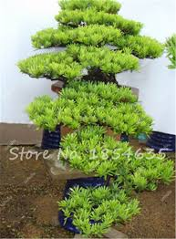 Decorative Plants For Home Print Of Ingredients Of Best Potting Decorative Plants For Home