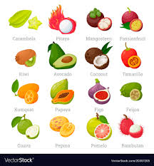 tropical fruit names. Perfect Fruit Exotic Tropical Fruits Set With Names Vector Image Throughout Tropical Fruit Names VectorStock