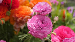 bright pink flowers free stock fooe