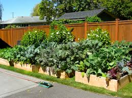 wooden fence for small backyard garden spaces with diy raised bed with various plants and wire trellis ideas