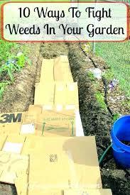 vegetable garden weed barrier control