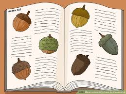 Types Of Acorns Chart How To Identify Oaks By The Acorns 13 Steps With Pictures