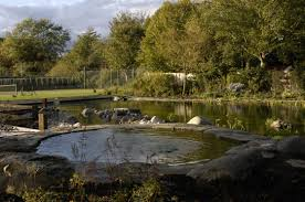 Swimming Pool:Stone Pond Idea As Natural Swimming Pool Design Natural Pond  Swimming Pool Idea