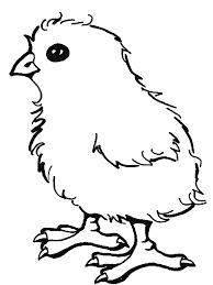 Dessin Imprimer Du Net Coloriage Poussin