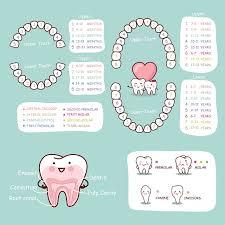 Order Of Teeth Appearance