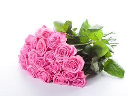 6 Gambar Bunga Mawar Cantik Cocok Untuk Wallpaper Pink
