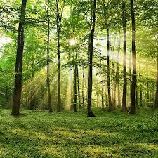 nature backgrounds. 31 Best Nature Background Images On Pinterest | Photo Backgrounds, Photography Backdrops And Backgrounds S