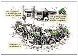 Small Picture Rain Gardens A Way to Improve Water Quality Center for