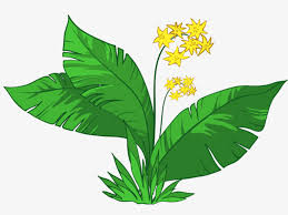 Image result for leafy clipart