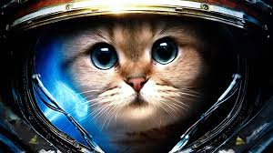 hd space cats wallpaper. Delighful Cats Space Cat 1920x1080  Imgur Funny Cats Animals Cute Cats Inside Hd Wallpaper 0