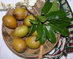 Guava Tree Information U2013 Growing And Caring For A Guava TreeFruit Trees For North Florida