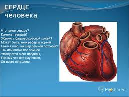Презентация на тему СЕРДЦЕ человека Что такое сердце Камень  1 СЕРДЦЕ