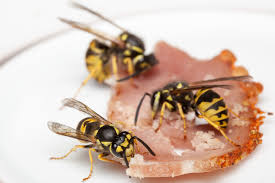 Bee And Wasp Identification Chart Uk How To Identify European Wasps Agriculture And Food